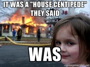 House Centipede death