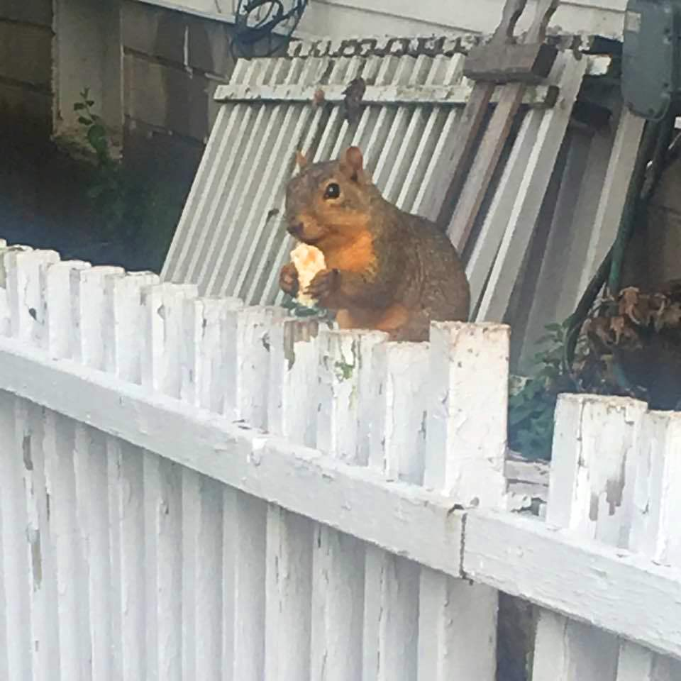 urban-squirrel