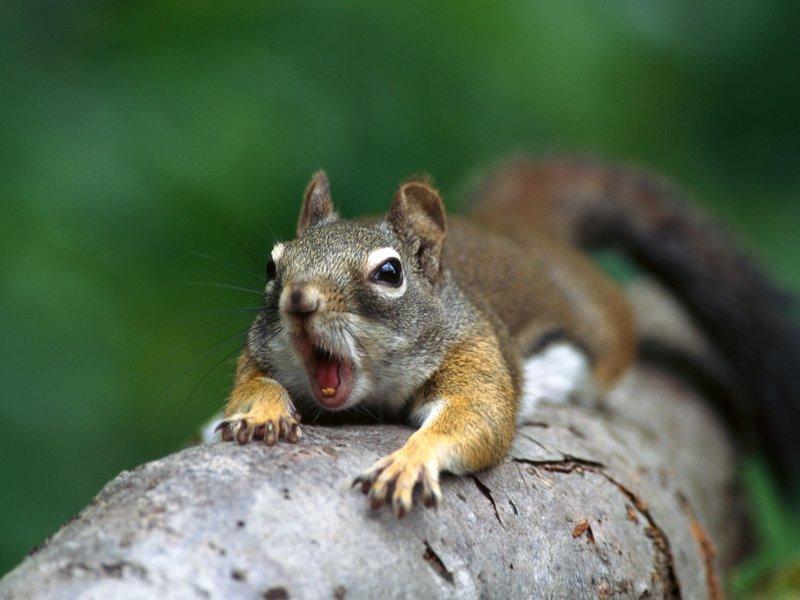 squirrel-image-1