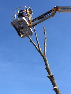 Tree - 11
