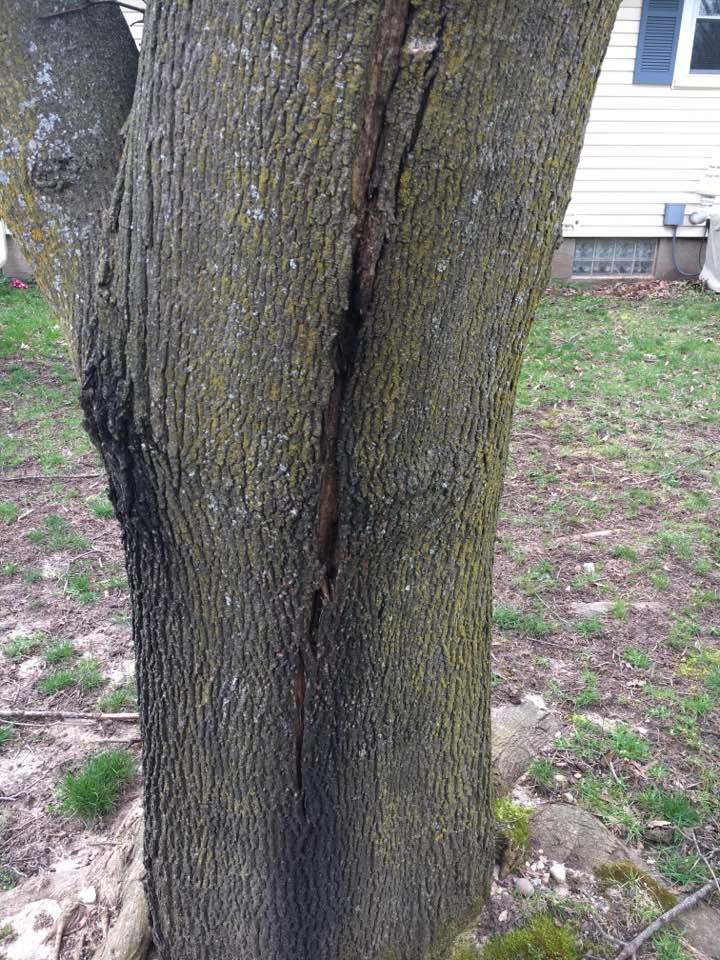 Tree - 2 Weeps
