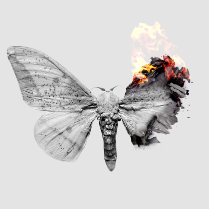 Burning+Moth
