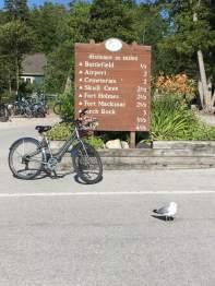 Bike - Pigeon