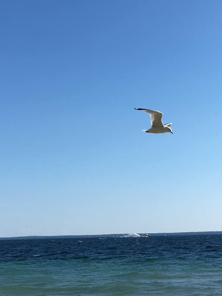 BIke - Seagull4