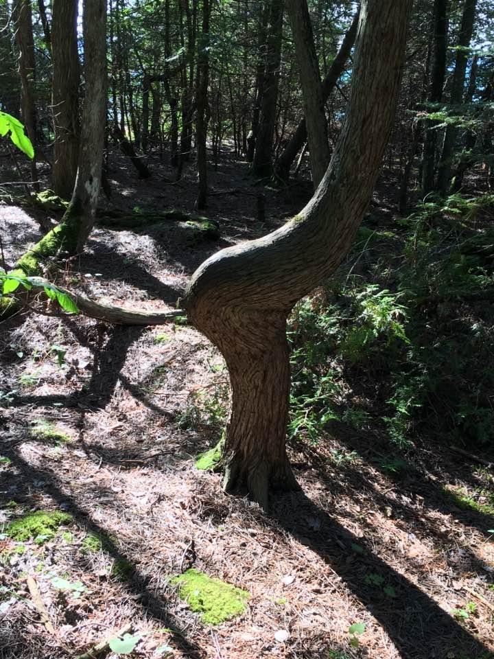 BIke - Tree