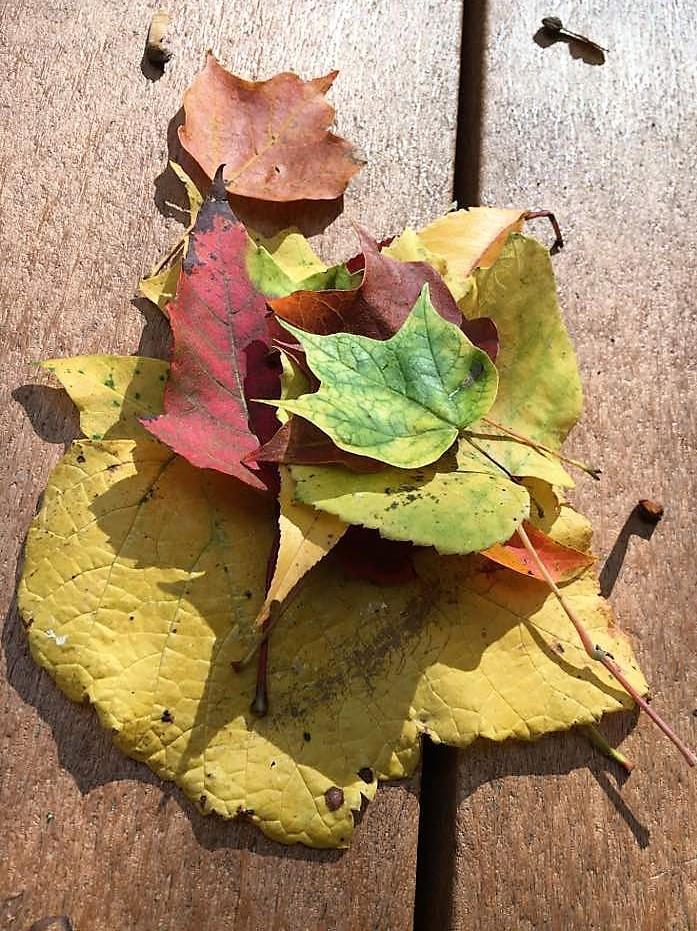 Ledges - Leaves