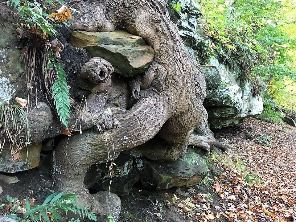 Ledges - Tree Eating Rocks