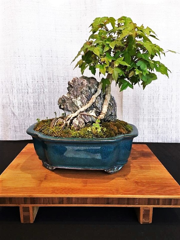 Blue Bowl and Bonsai with Rock