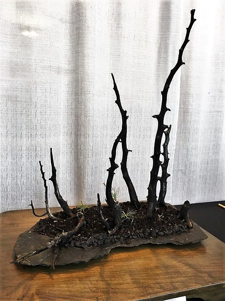Burnt Bonsai
