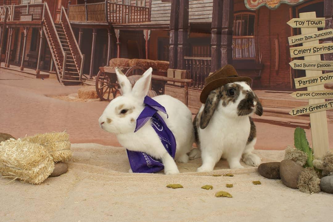 Bunny Duo