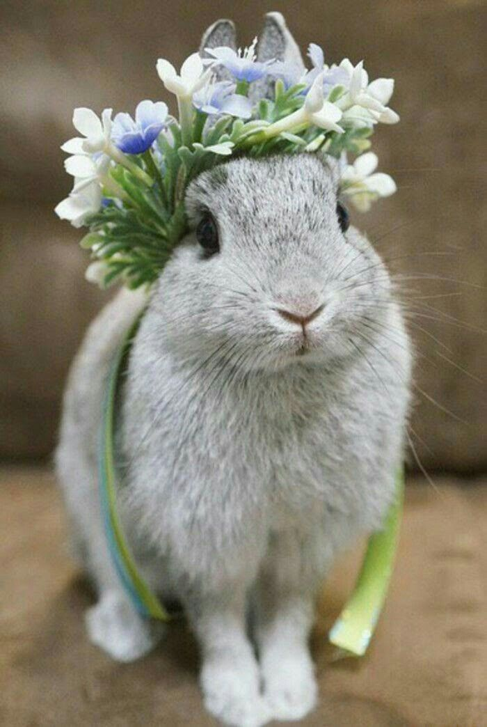 Flory-Dory Flopsalot Headgear Bunny