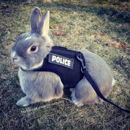 police bunny