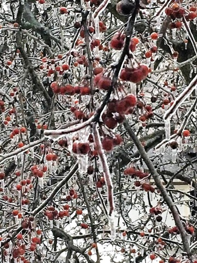 Ice Storm Tree Berries